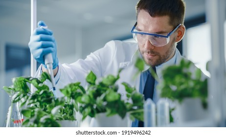 Handsome Male Microbiologist Adding Biological Nutritional Supplement, Vitamins and Minerals from a Pipette to Growing Green Plants. Medical Scientist Working in a Modern Food Science Laboratory.