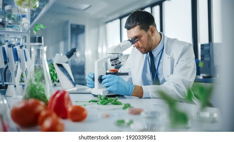Handsome Male Scientist in Safety Glasses Analyzing a Lab-Grown Tomato Through an Advanced Microscope. Microbiologist Working on Molecule Samples in Modern Laboratory with Technological Equipment.