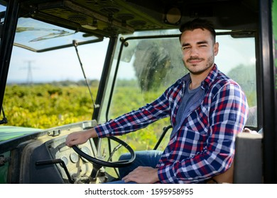 handsome man farmer in the vine driving a tractor and harvesting ripe grape during wine harvest season in vineyard