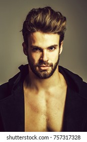 Handsome man or macho, bearded hipster with beard and blond hair poses in open coat with bare muscular chest on grey background