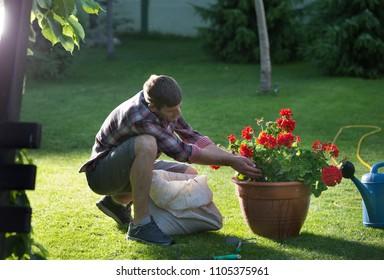 Handsome man putting soil into flower pot with geraniums in garden & Flower Pot Man Images Stock Photos \u0026 Vectors | Shutterstock