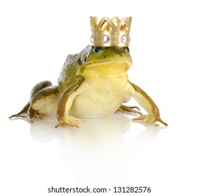 handsome prince - bullfrog wearing crown isolated on white background