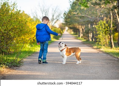 Handsome teenager boy with friend puppy english bull dog walking in nature park zone.Red white american bully with child in blue jacket jeans and hoody in forest happy together with big friendship.