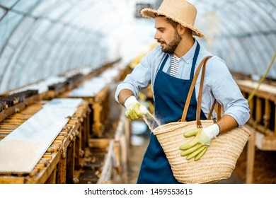 Handsome worker feeding snails, powdering food on the special shelves in the hothouse of the farm. Concept of farming snails for eating