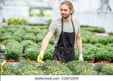 Handsome worker in uniform taking care of flowers in the greenhouse