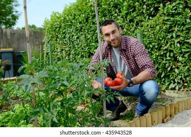 handsome young gardener growing organic bio vegetables
