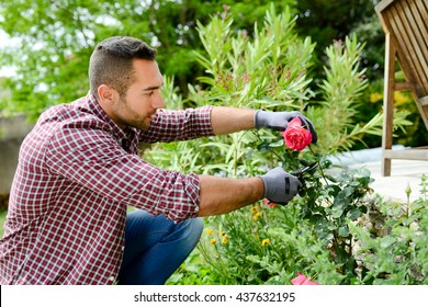 handsome young man gardener landscaping and taking care of beautiful roses