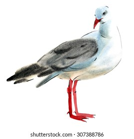 Handwork watercolor illustration of a bird Seagull in white background.