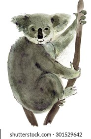 Handwork watercolor illustration of Koala in white background.