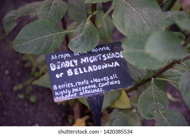 Handwritten plant sign for Deadly Nightshade or Belladonna, subtext states that berries, roots and leaves all highly poisonous, contains tropenen alkaloids. White writing on black background.