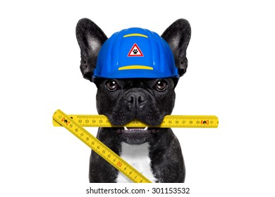 handyman dog worker with helmet and folding ruler, ready to repair, fix and measure  everything at home, isolated on white background