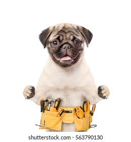 Handyman dog worker with toolbelt.  Isolated on white background