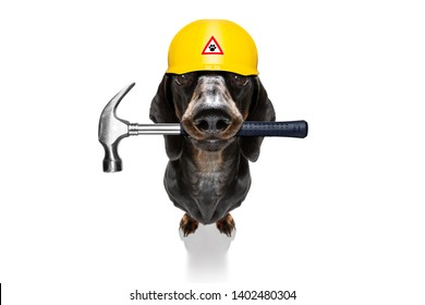 handyman  sausage dachshund dog worker with helmet and hammer in mouth, ready to repair, fix everything at home, isolated on white background