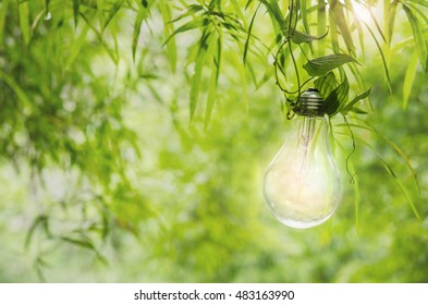 hang keep Light bulb glowing  idea or energy concept