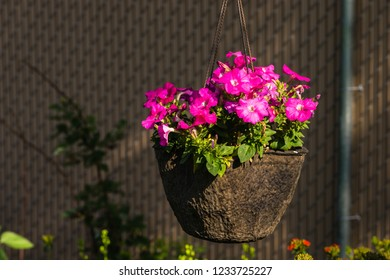 hanging baske of petunias with blured background fense