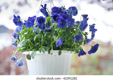 A hanging basket of blue pansies, with blurred background.