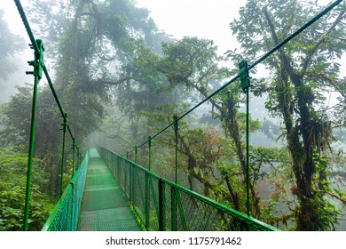 Hanging Bride in Costa Rica mythical Cloudforest.