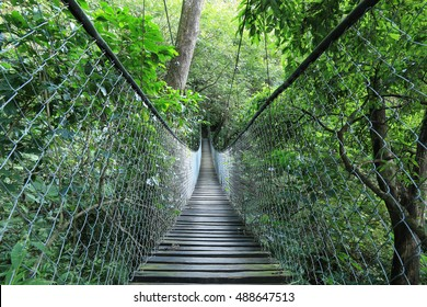 Hanging bridge in a rain forest, Guatemala