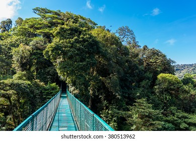Hanging Bridges in Forest - Walking in the trees