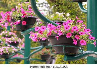 Hanging flower pot in garden