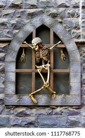 Hanging Hume Skeleton