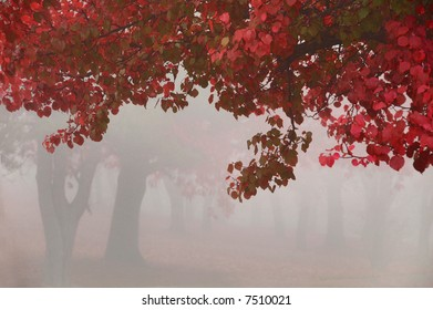 hanging leaves on a foggy morning with tree trunks in the background