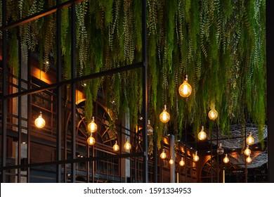 hanging long deciduous plants and burning light bulbs from the ceiling, design