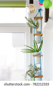 Hanging  multi plant system, using pots from recycled plastic milk containers