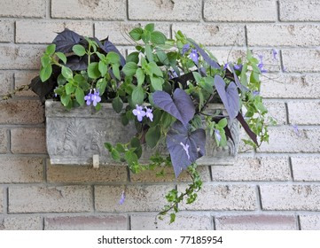 hanging outdoor planter with an arrangement of annual flowers for the shade