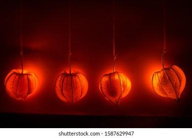 Hanging physalis - bright shine