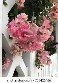 Hanging pink bouquet