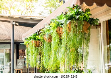 hanging plant in pot decoration at home garden