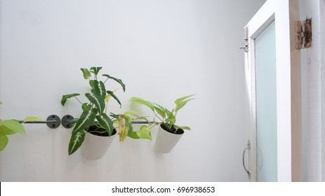 Hanging plant pot outside the room for decoration and relaxation
