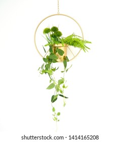 Hanging plant in a wire planter with greens, plants and vines in a modern wire isolated on white.