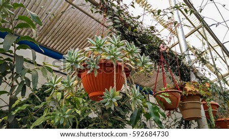 Hanging Plants In The Pots Of Indian Nursery For Decorative Hanging Garden
