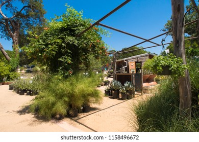 hanging and potted plants in an outdoor nursery