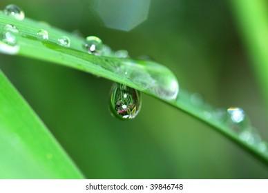 Hanging Raindrop