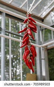 Hanging Strand of Red Chili Peppers on a background of glass building