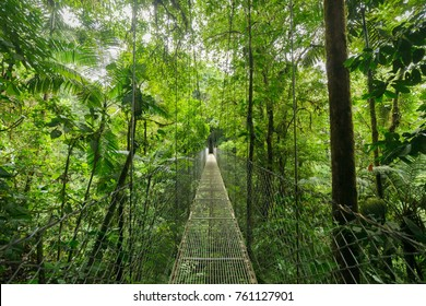 Hanging suspension bridge in Monteverde cloud forest reserve Costa Rica