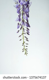 Hanging wisteria flowers image