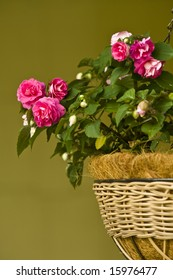 A hanging woven basket full of bright pink double impatiens.
