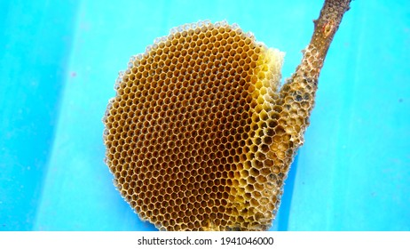 Hangings Yellow Honey comb with a blue background. Attractive Bee hive on a wooden stick. Micro holes on bee hive with light yellow honey comb.