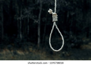Hangman's loop on the background of the forest. Creative background, the concept of despair, a dead end, a desperate situation.
