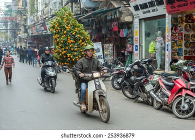 HANOI, VIETNAM FEBRUARY 10: Vietnamese man transports an orange tree on February 10, 2015 in Hanoi. Vietnamese traditionally decorate their homes for the Chinese New Year with a citrus fruit tree.