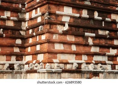 Hanuman langur, Semnopithecus entellus, monkey from Sacred City, sitting on the wall of  Jetavanaramaya stupa, temple from red bricks. Typical scene from world heritage city Anuradhapura, Sri Lanka.