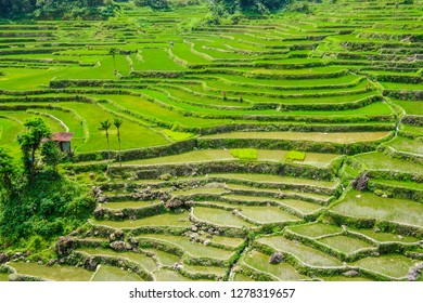 Hapao Rice Terraces, part of the World Heritage Site Banaue, Luzon, Philippines