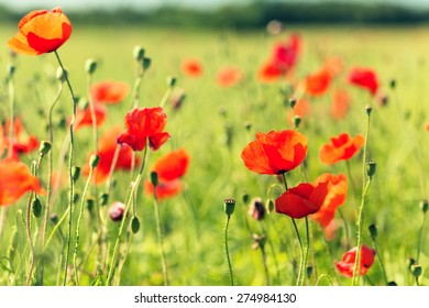 happiness, nature, summer and vacation concept - blooming poppy field
