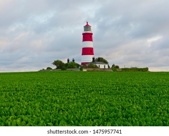 Happisburgh lighthouse standing in a filed of sugar beet on a summer evening