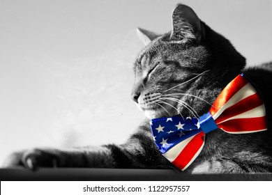 Happy 4th of July conceptual image with a proud American Tabby cat wearing a patriotic bow tie. Black and White image other than the tie.
