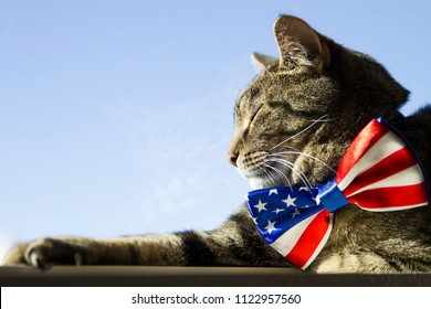Happy 4th of July conceptual image with a proud American Tabby cat wearing a patriotic bow tie.